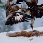 bbc one planet earth ii three word review